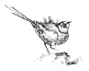 bird_sketch_ink_amanda_sun